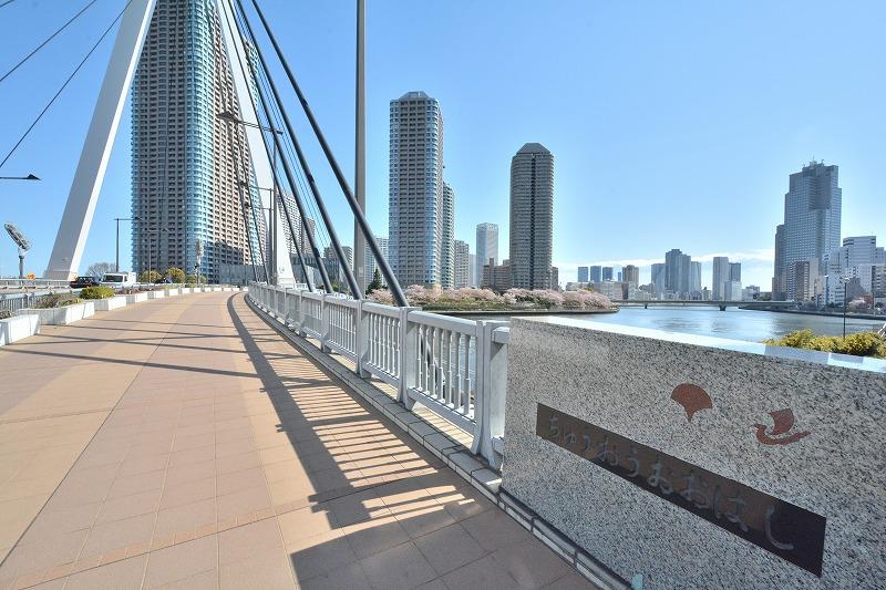 春の中央大橋